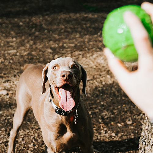 Active Dog Daycare